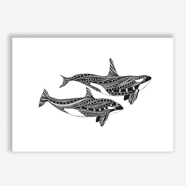 Killer whales – The wild
